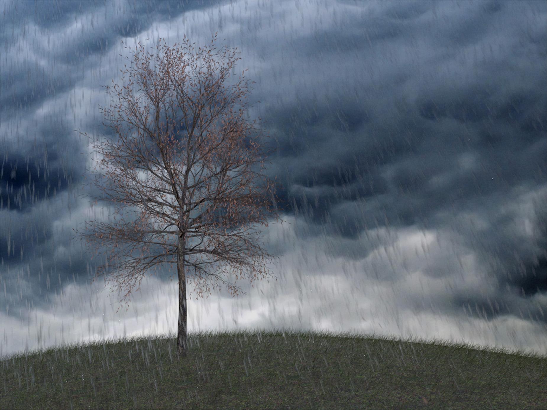 marius-stuemmler_baum-im-wind-und-regen_titel-0042_02